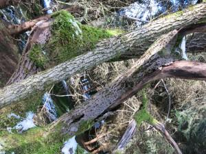 Wir sahen vor lauter Bäumen den Wald nicht mehr